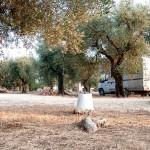 agricampeggio-salento-sosta-camper-camping-tenda-2
