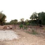 agricampeggio-salento-sosta-camper-camping-tenda-4