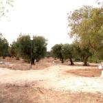 agricampeggio-terra-di-moro-salento-camping-ugento-5