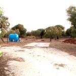 agricampeggio-terra-di-moro-salento-camping-ugento-7