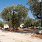Agricampeggio-salento-estate-camper-4