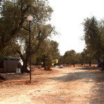 Agricampeggio-salento-estate-camper-6