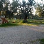 servizi campeggio salento ad ugento terra di moro (5)