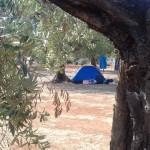 servizi campeggio salento ad ugento terra di moro (7)