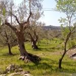escursione in salento terra di moro (15)