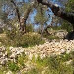 escursione in salento terra di moro (16)