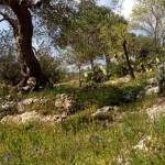 escursione in salento terra di moro (17)